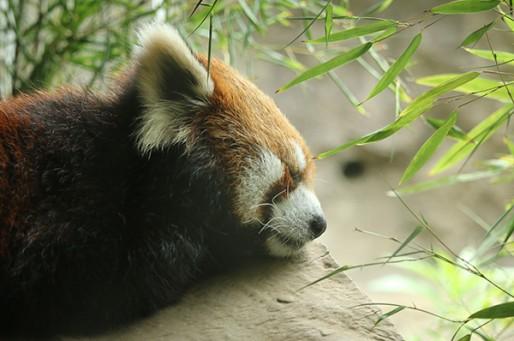 ナイト野毛山動物園