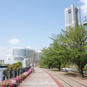 横浜・桜木町 お散歩コースに運河沿いの「汽車道」がおすすめ!