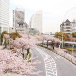横浜みなとみらい「さくら通り」の最寄駅は?場所と行き方を地図と写真で確認