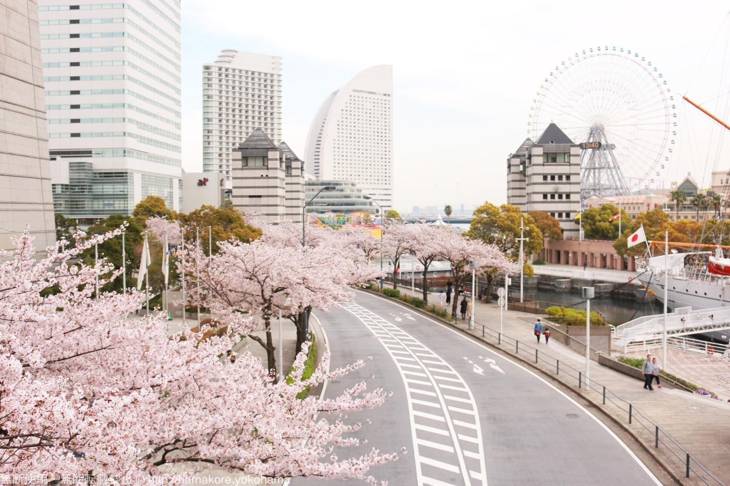 横浜みなとみらい「さくら通り」の場所を地図と写真で紹介!