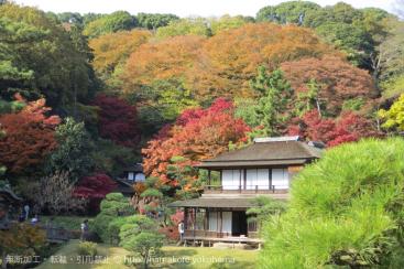 みなとぶらりチケット 三渓園の紅葉デザインを数量限定で発売!