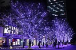 横浜「MARK IS」でクリスマスツリーが点灯!みなとみらい最大級の幻想的イルミネーションも