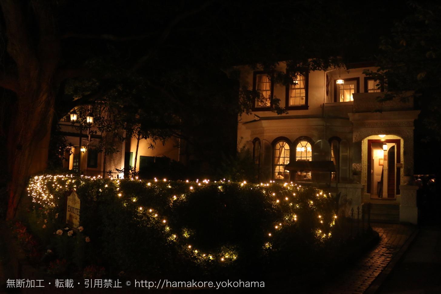えの木てい 夜のライトアップの様子