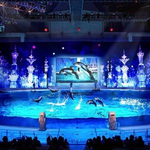 横浜・八景島シーパラダイスのショーが2017年4月28日に一新!プロジェクションマッピングとイルカのコラボが凄い