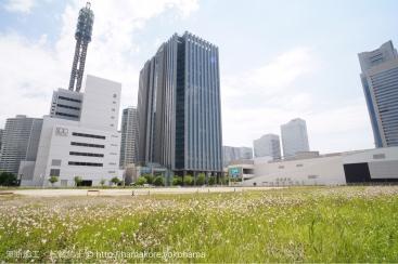 2017年6月 神奈川大学 みなとみらいキャンパス(仮称)予定地の様子