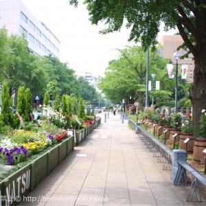 横浜公園〜日本大通り「ガーデンネックレス」で満開に咲く花と街並みに感動!