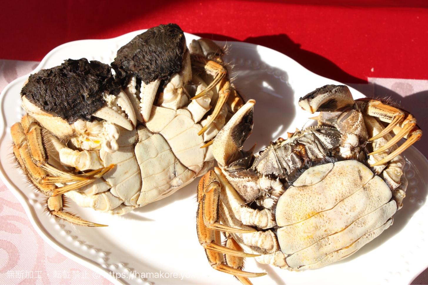 上海蟹のオスとメスの判別方法