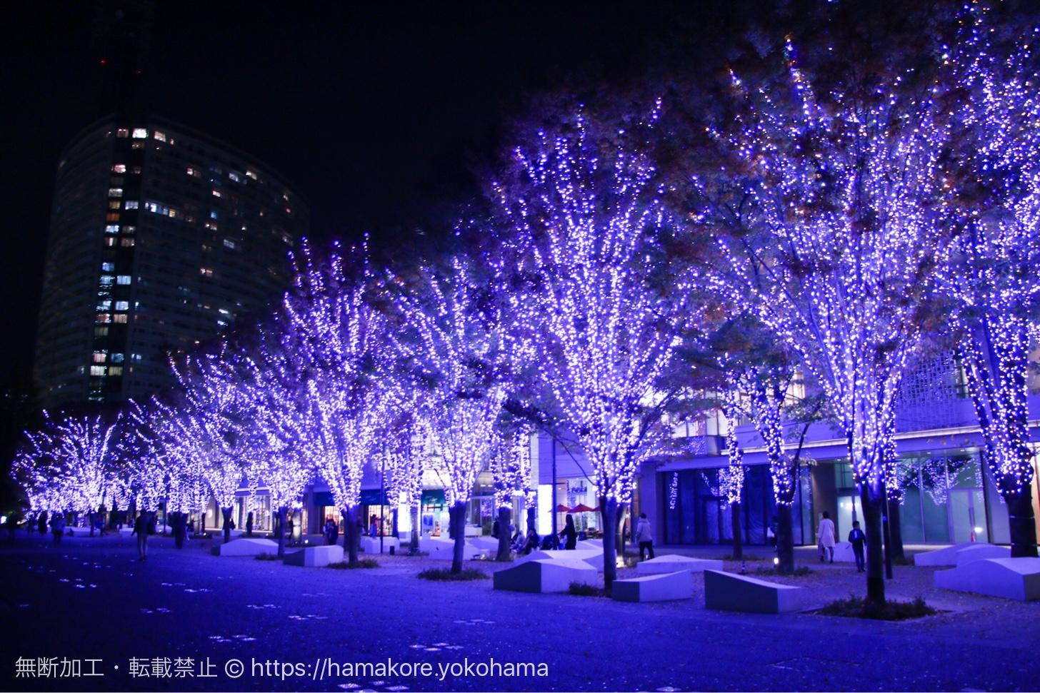 2017年 グランモール公園のクリスマスイルミネーション 規模拡大でケヤキ並木の美しい光景が広がる