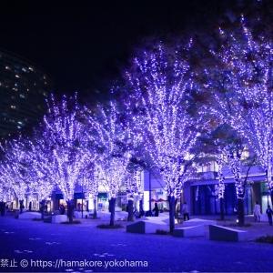 2017年 グランモール公園のクリスマスイルミネーションが規模拡大でケヤキ並木の美しい光景が広がる