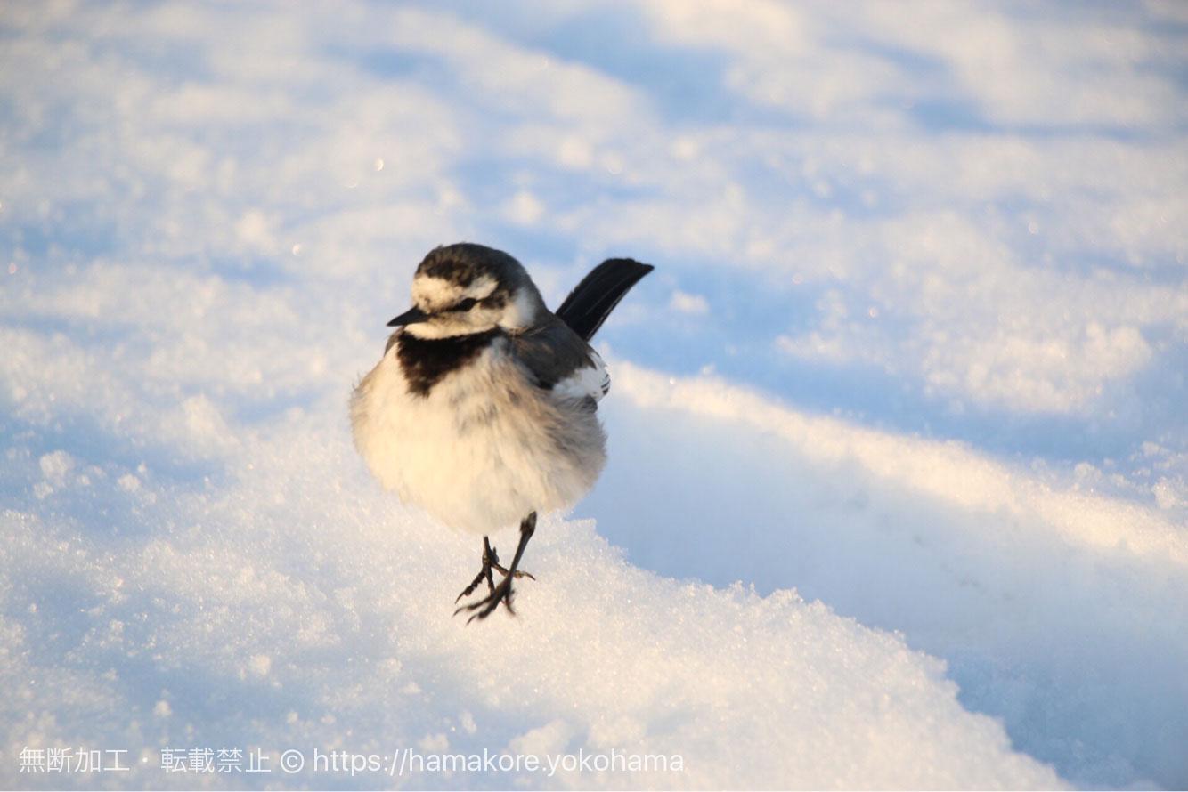 雪の上の小鳥
