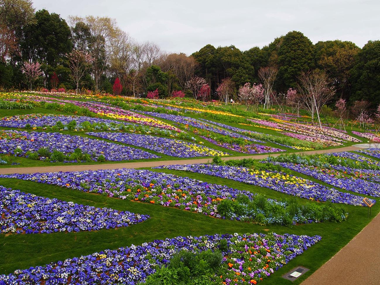 市内産のパンジー・ビオラを中心に春らしいパステルカラーの花で彩る市内最大級約の大花壇