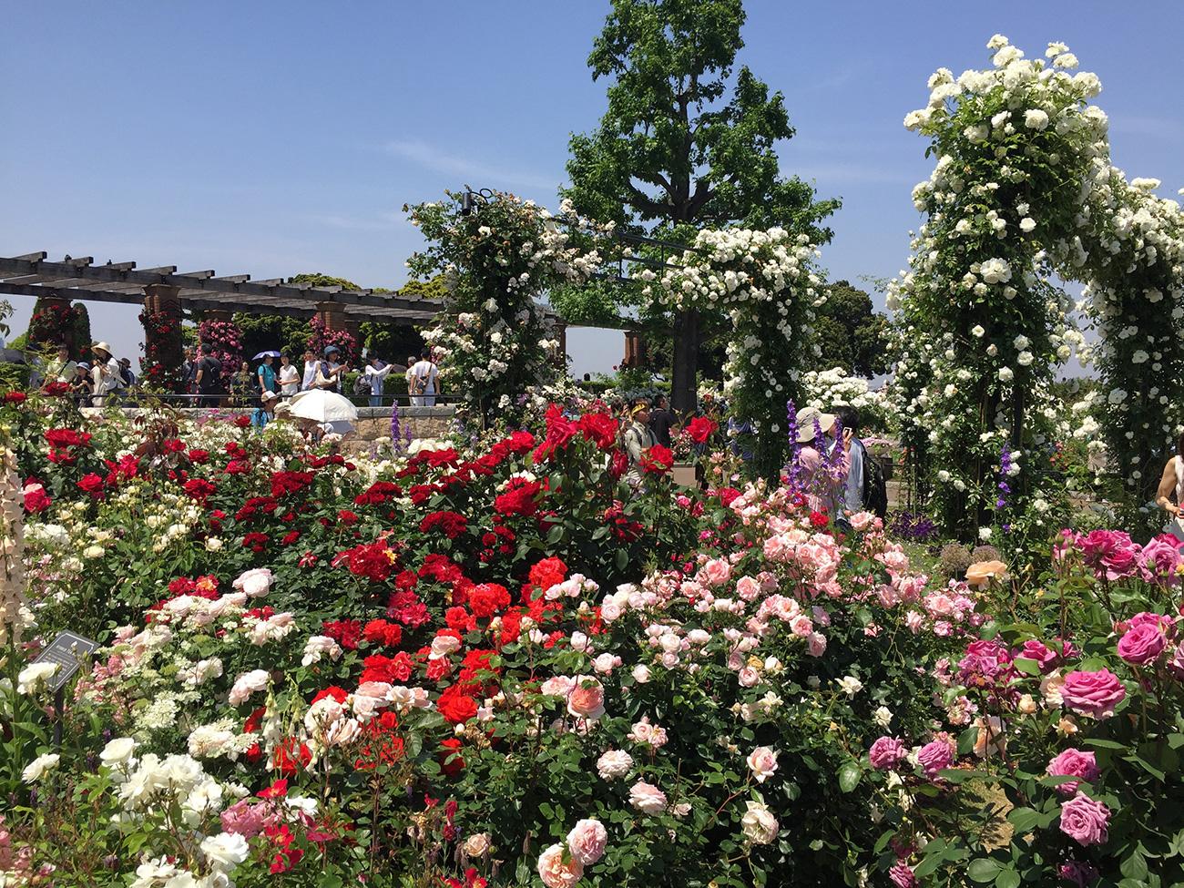 香りや色彩などテーマが異なる様々なバラ園