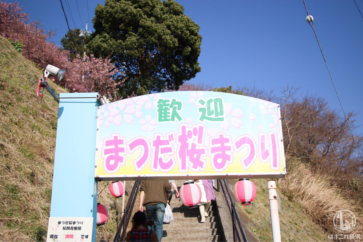 河津 神奈川 桜 県