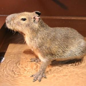 オービィ横浜 本物の動物と映像が調和したアニマルコンテンツ新設!リニューアル体験レポ
