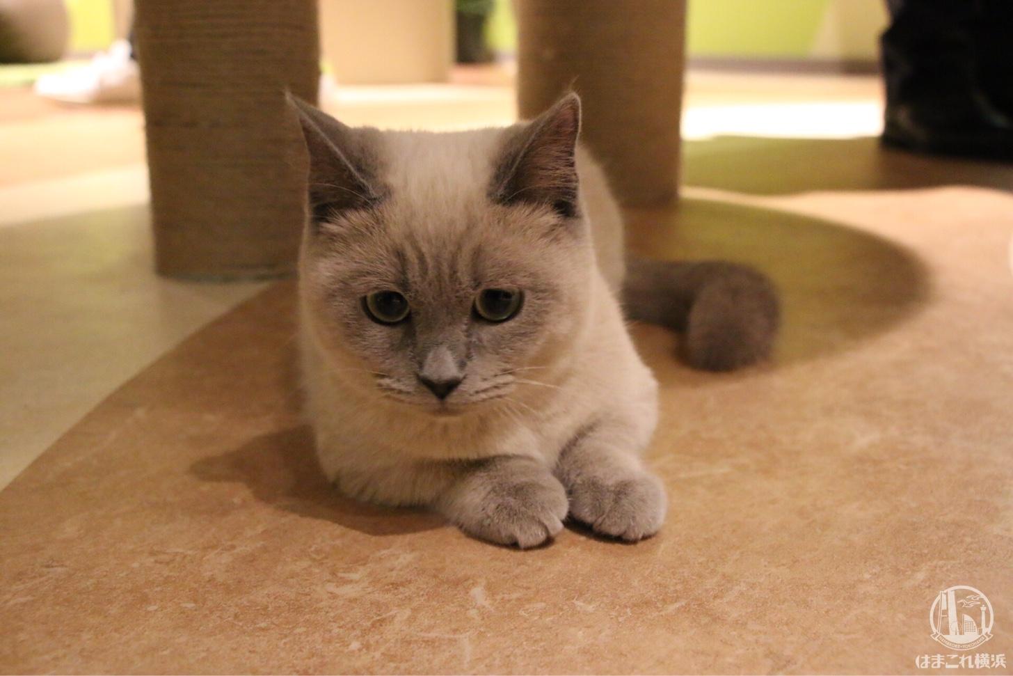 キャットパラダイス 猫