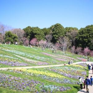 里山ガーデン ガーデンネックレス横浜「里山ガーデンフェスタ」の春爛漫・大花壇に見惚れる