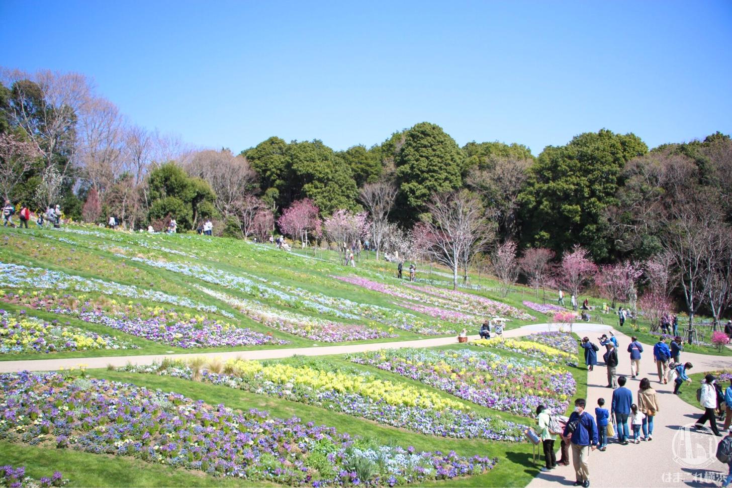 里山ガーデン 大花壇