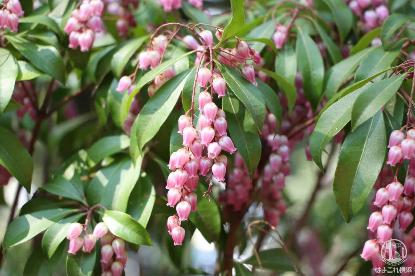 里山ガーデン 春イベント