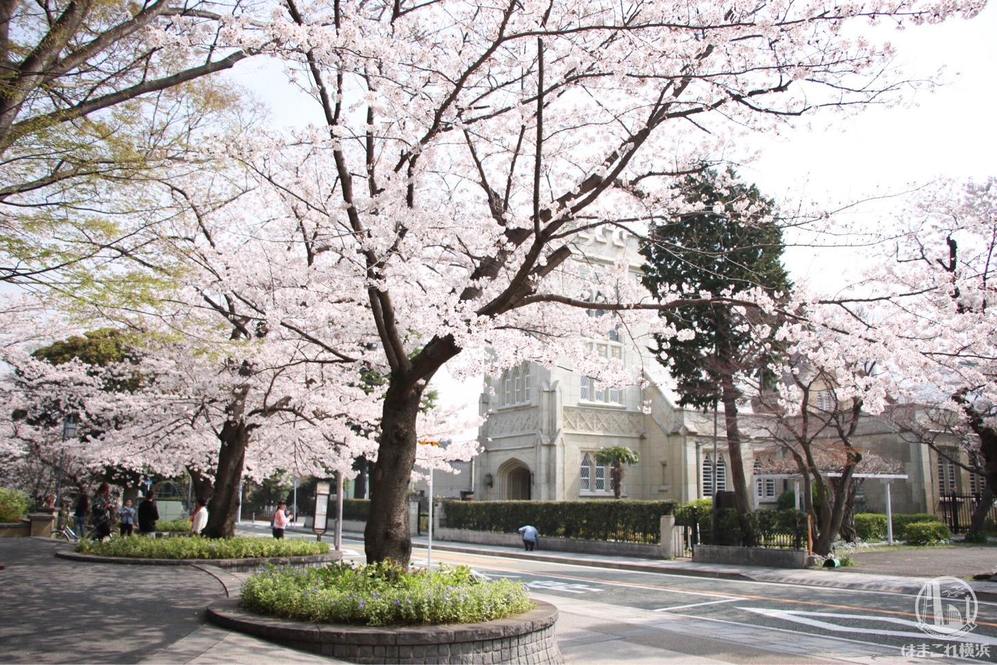 元町公園 桜スポット