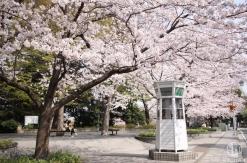 横浜 山手元町の桜スポットまとめ!元町公園・山手公園・港の見える丘公園