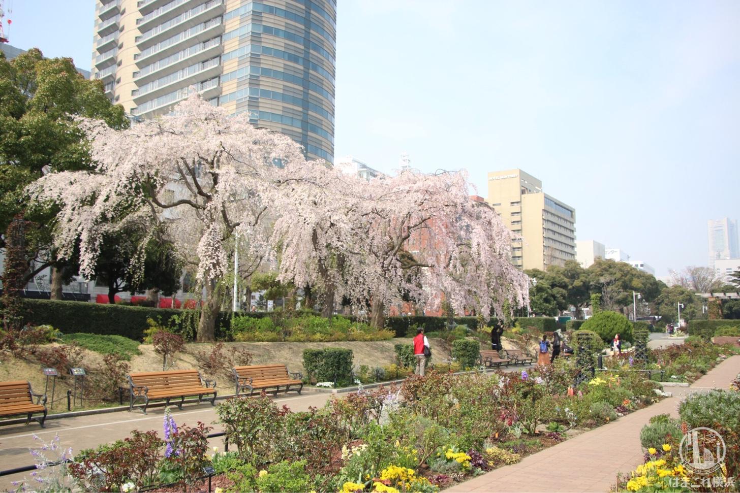 山下公園・ガーデンネックレス横浜