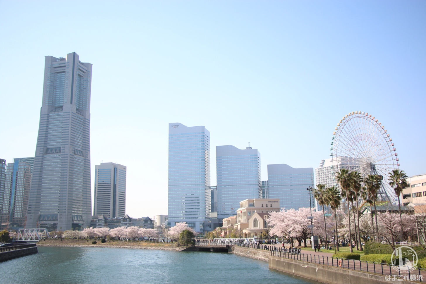 万国橋・みなとみらい桜スポット
