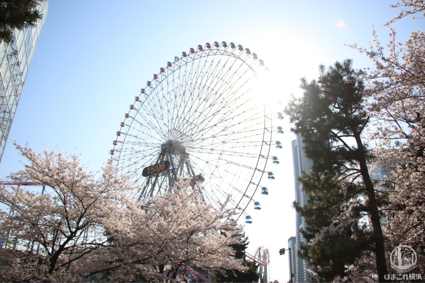 ・コスモクロック21と桜