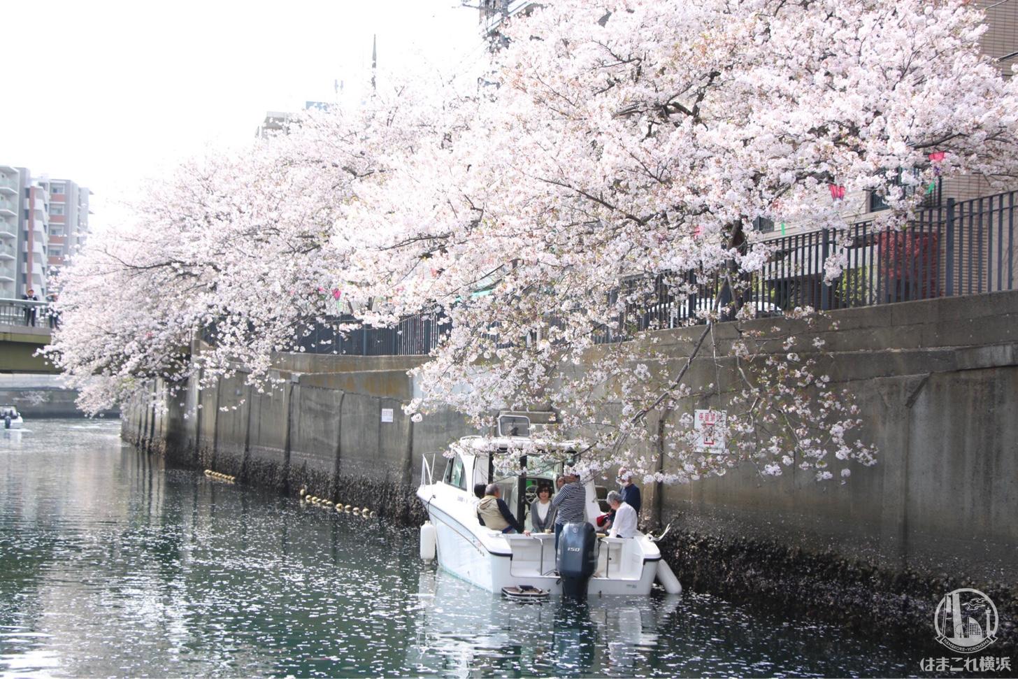 船の上でお花見を楽しむ人