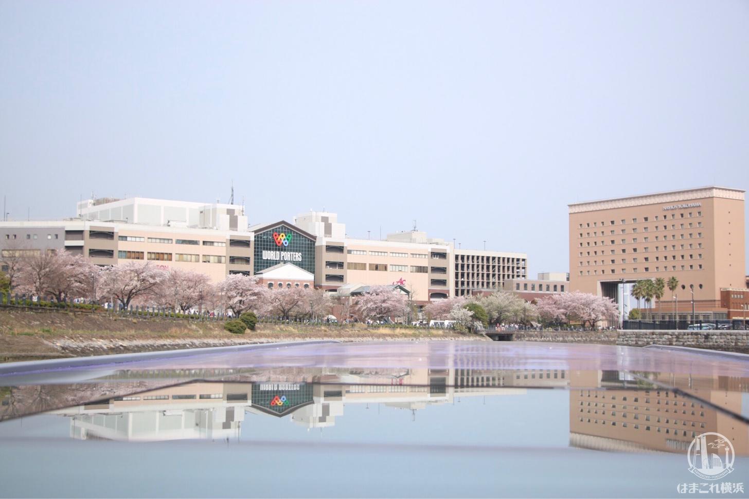 クルーズの帰り道に見た桜スポット・汽車道