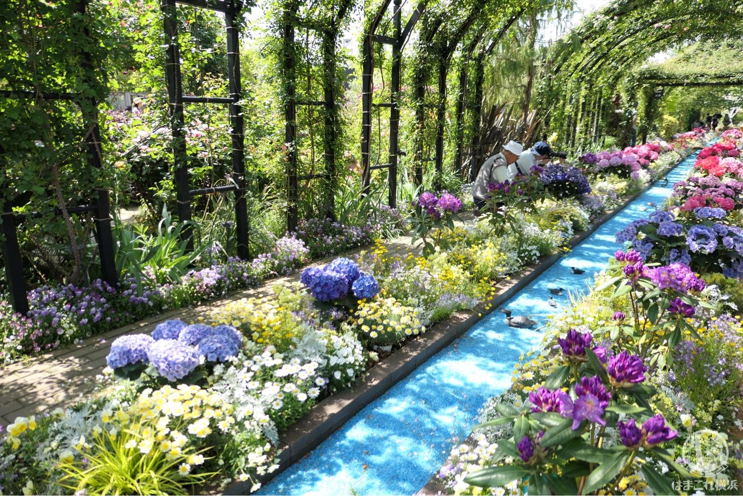 横浜イングリッシュガーデンのバラが圧巻の見頃!横浜駅すぐの自然溢れる癒しスポット