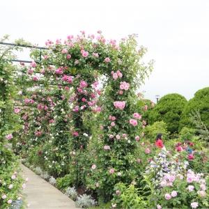 2018年 港の見える丘公園のバラが見頃!ガーデンを染めるバラを撮ってきた