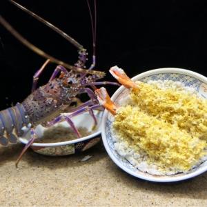 ヨコハマおもしろ水族館がユニーク展示で予想以上に面白かった!横浜中華街 屋内スポット