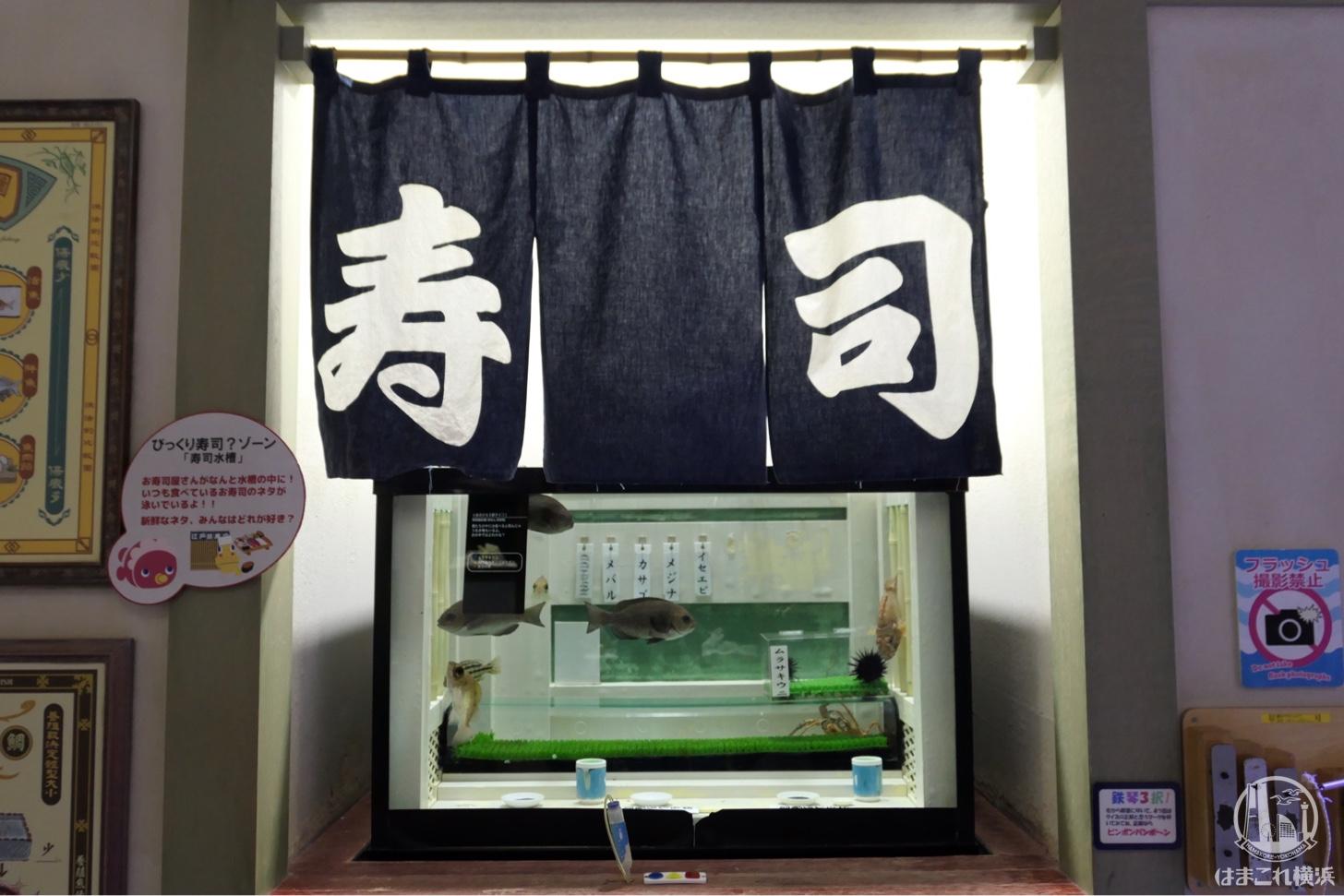 お寿司水槽