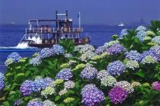 横浜・八景島シーパラダイス 県内最大級のあじさいが咲き誇る「八景島あじさい祭」を開催!