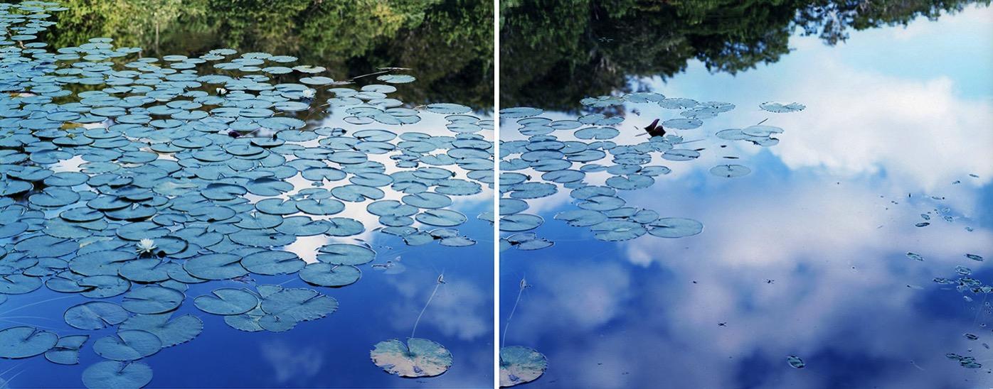 鈴木理策《水鏡 14, WM-77》(左)《水鏡 14, WM-79》(右) 2014年 作家蔵 ©Risaku Suzuki, Courtesy of Taka Ishi Gallery