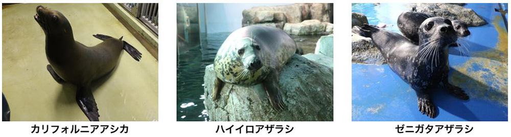 LABO3「海で進化した動物たち」