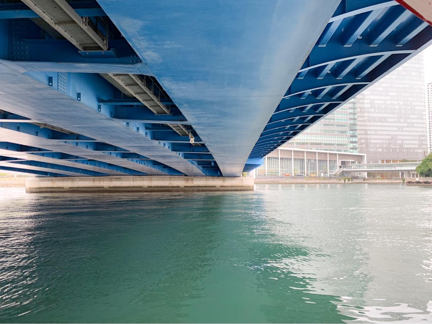 橋の下をくぐるシーバス