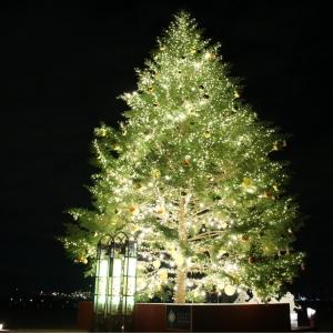2018年 横浜赤レンガ倉庫でクリスマスマーケット点灯!ツリーやルーフ、本場の雰囲気創出
