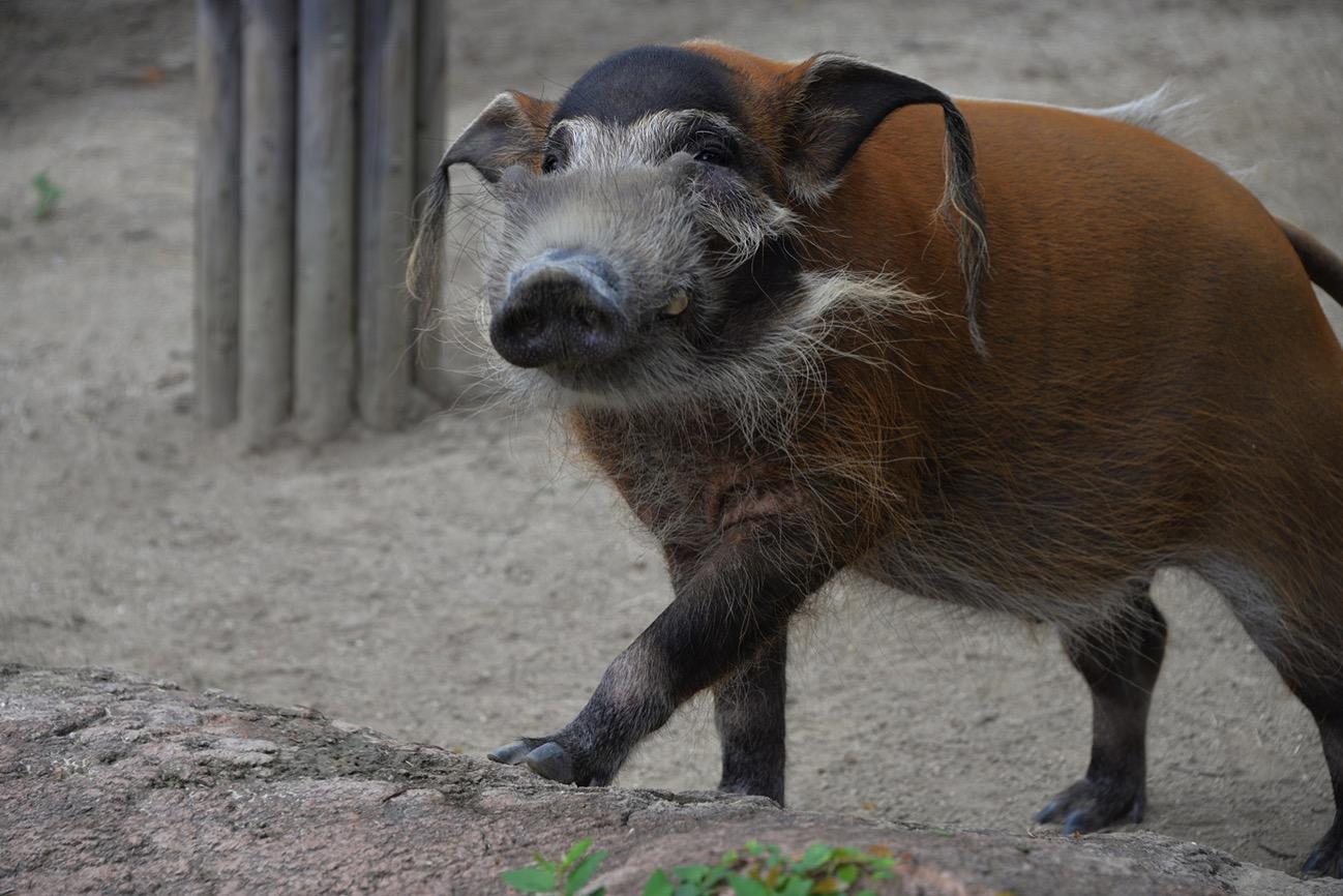 よこはま動物園ズーラシア福袋