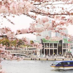 大岡川桜クルーズ 3月20日より運行!約600本の桜トンネルくぐる船上からのお花見