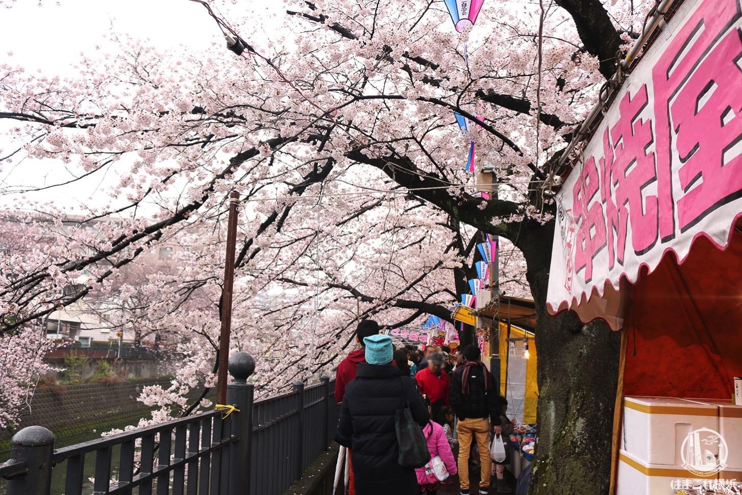 大岡川プロムナード 模擬店と桜