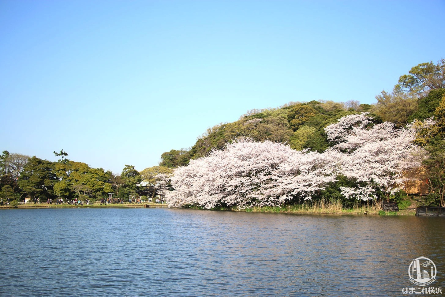 三渓園 大池