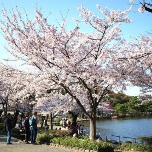 横浜・三渓園の桜レポ 桜と日本建築のコラボが美しすぎるお花見スポット