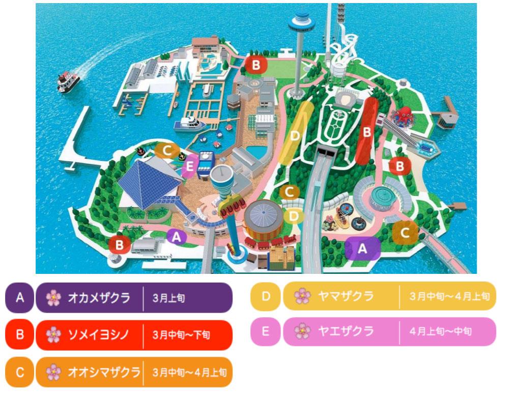 横浜・八景島シーパラダイス 桜マップ
