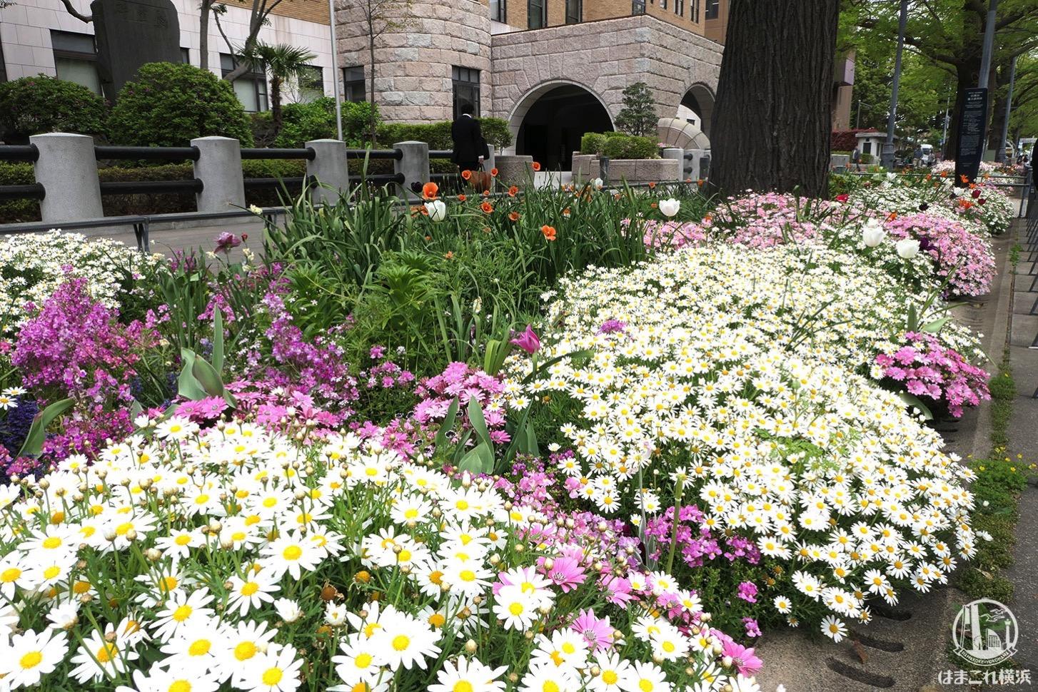 日本大通りの花々