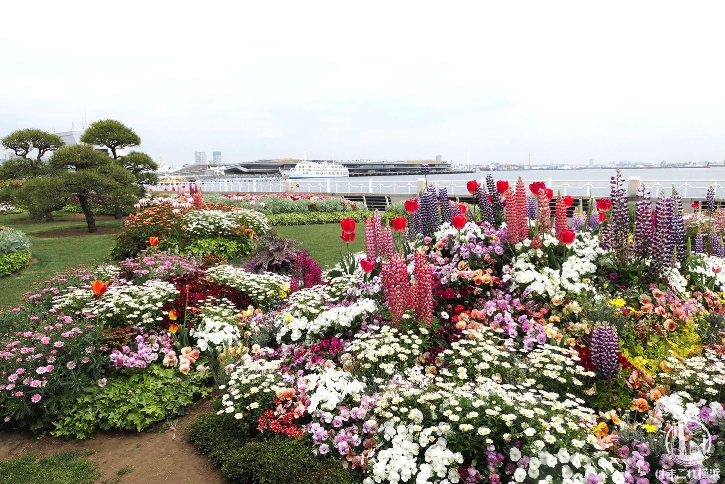 山下公園の港そばの花々