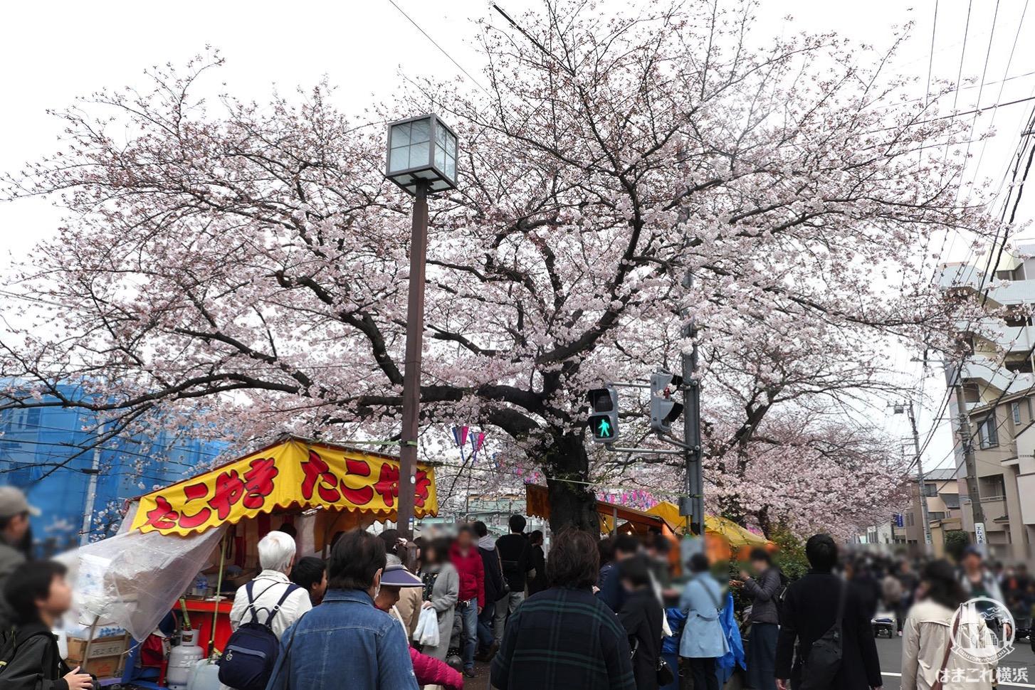 大岡川の桜まつりで屋台と花見を楽しむなら弘明寺の商店街スタートがおすすめ!