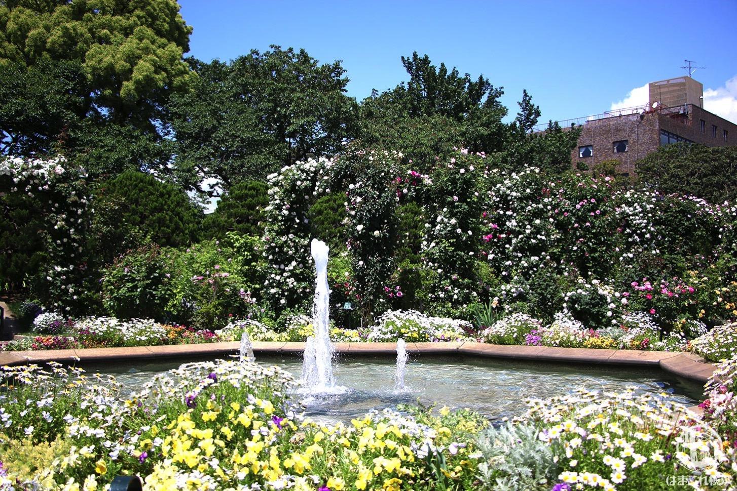 港の見える丘公園を彩るバラと噴水