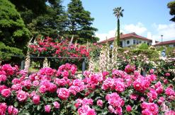 港の見える丘公園のバラが超見頃で濃密楽しめた!山手散策人気スポット