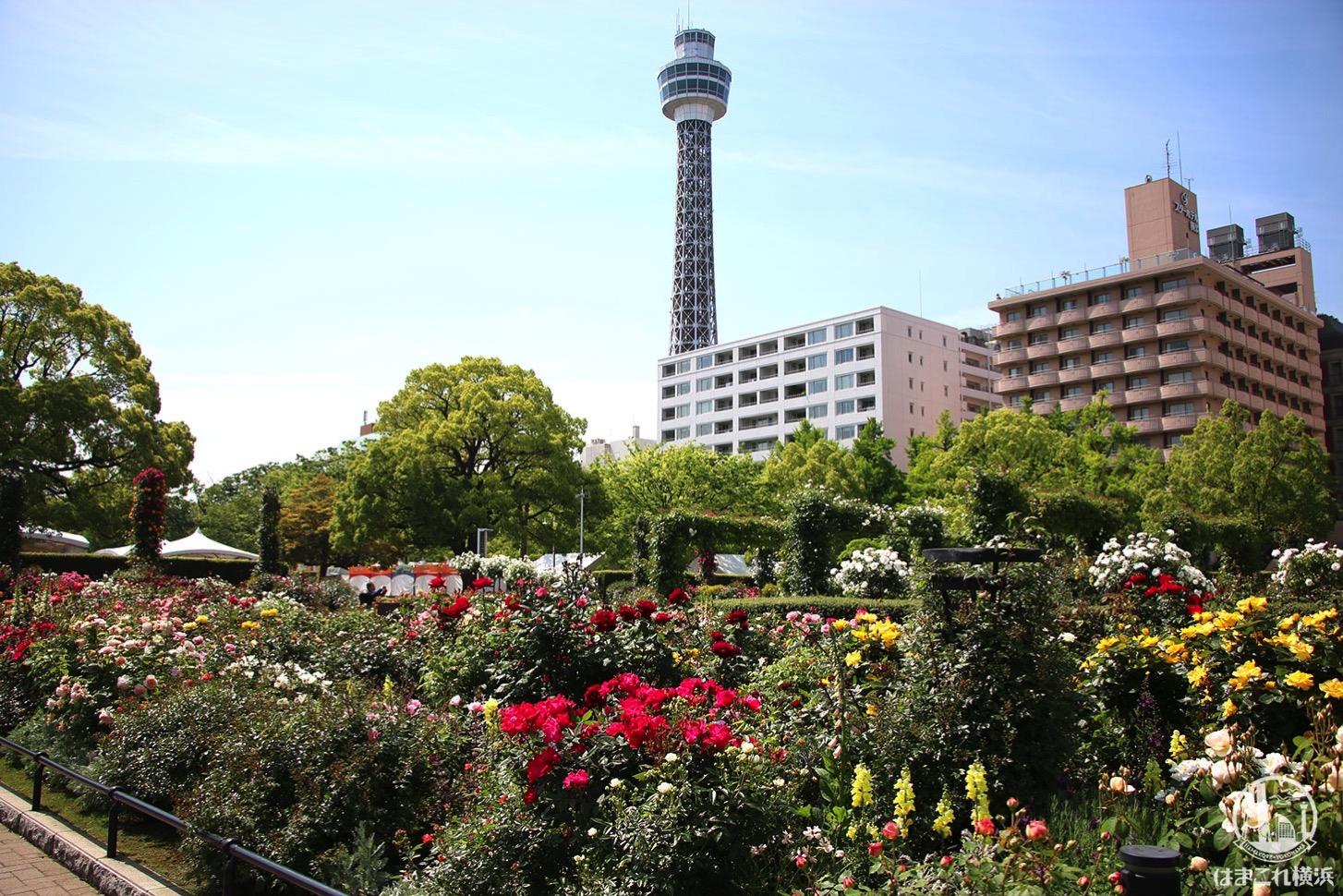 バラと横浜マリンタワー